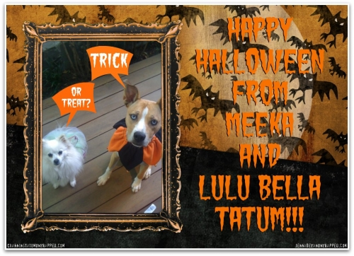 Chan and Jenna's Dogs Meeka and Lulu Bella Dressed Up for Halloween